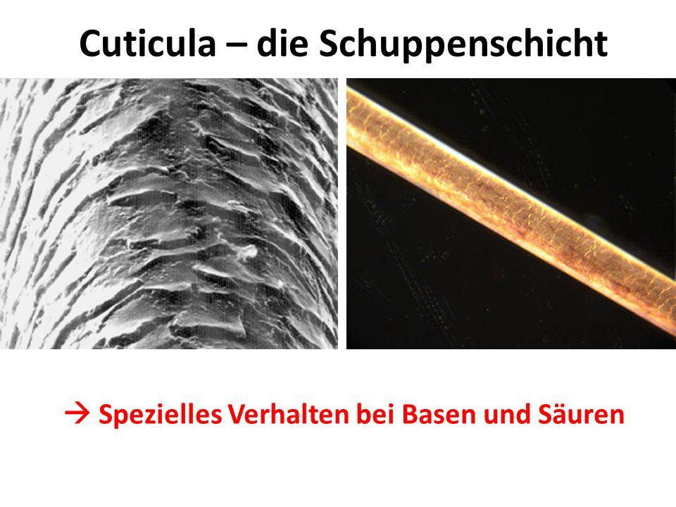 Cuticula – die Schuppenschicht