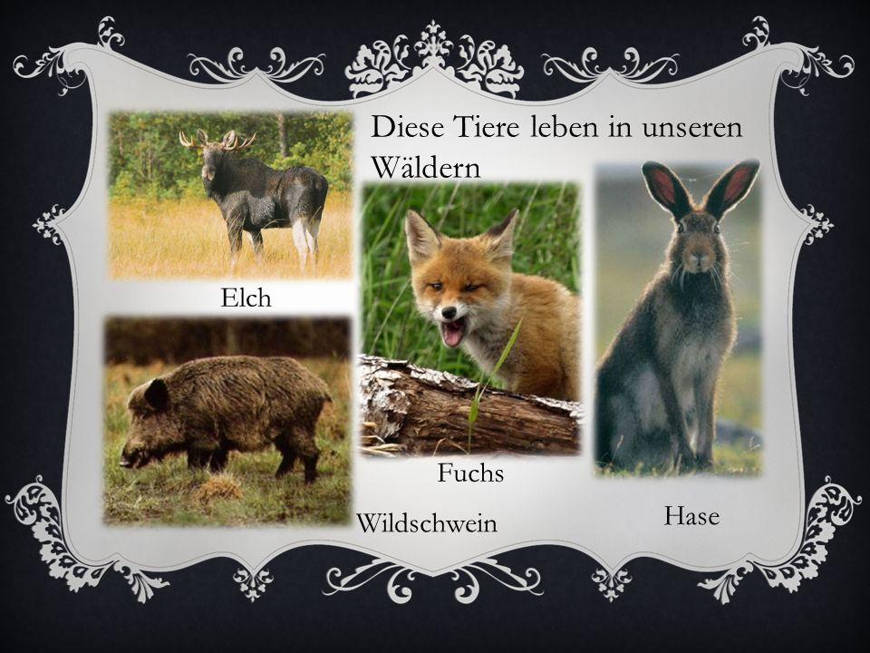 Diese Tiere leben in unseren Wäldern