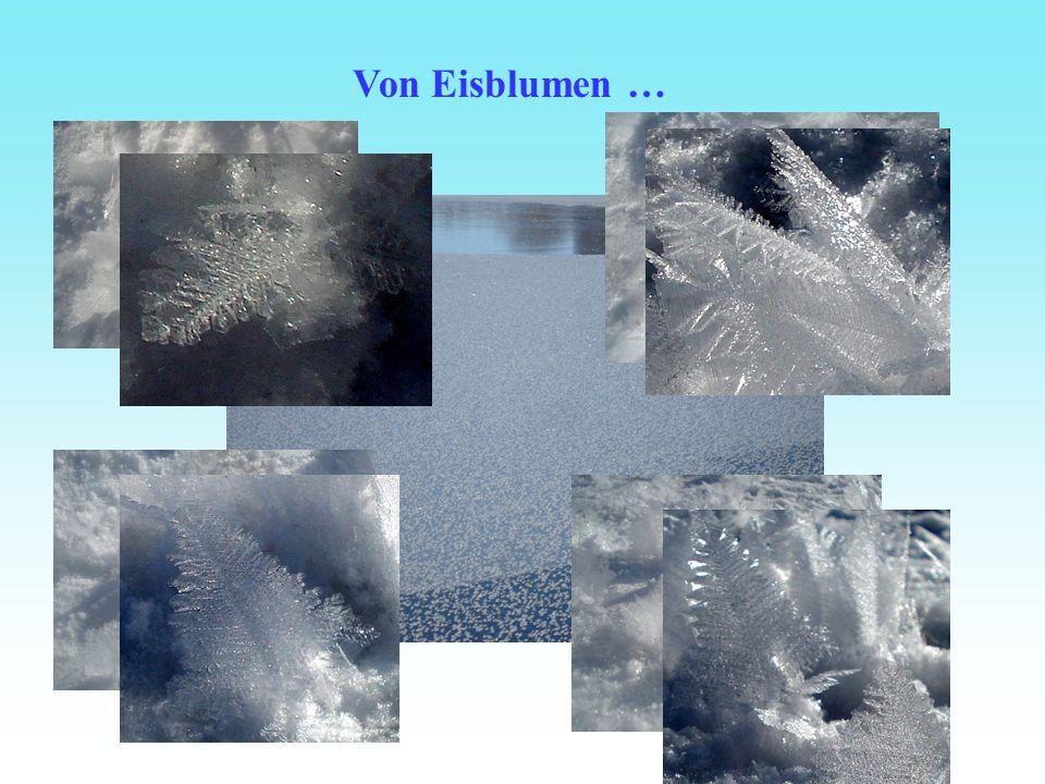 Von Eisblumen …
