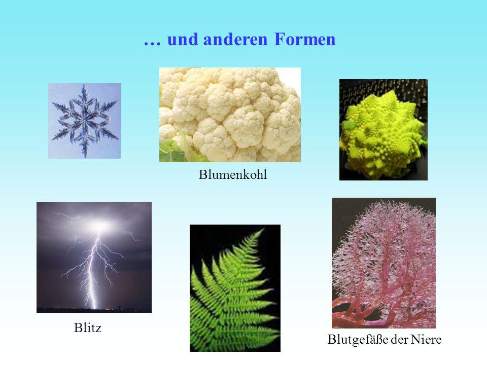 … und anderen Formen Blumenkohl Blitz Blutgefäße der Niere