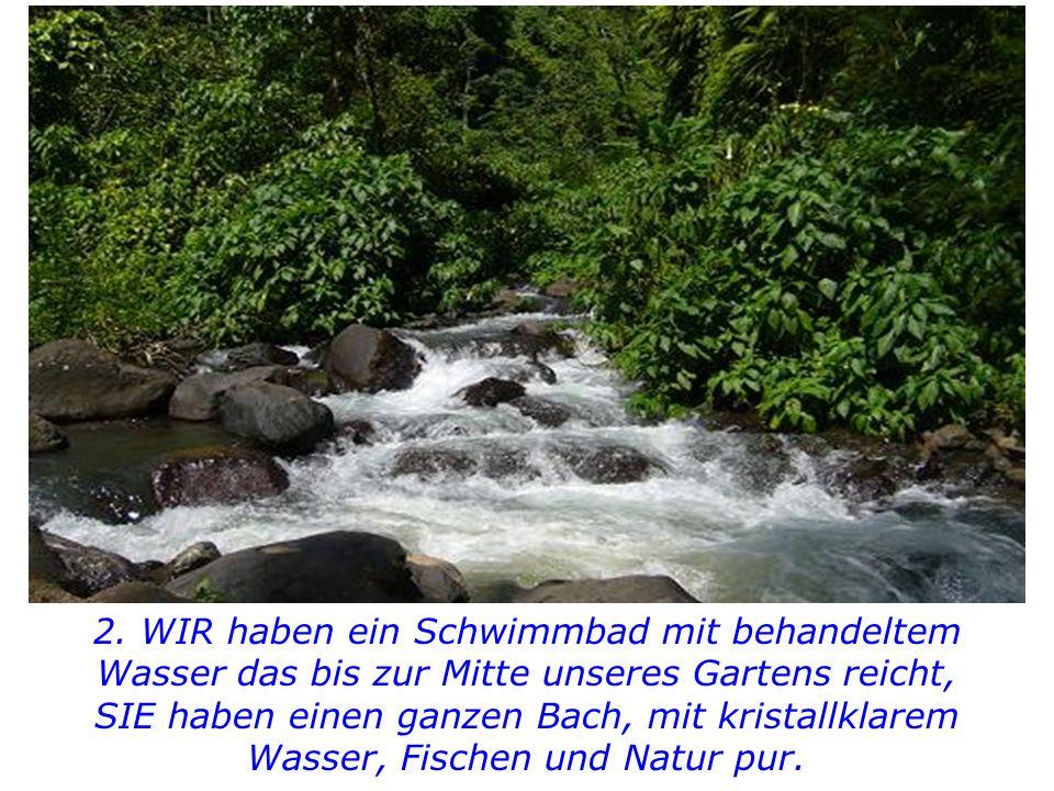 2. WIR haben ein Schwimmbad mit behandeltem Wasser das bis zur Mitte unseres Gartens reicht,