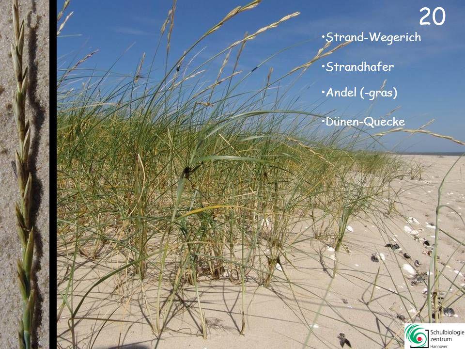 21 Strand-Sode Strand-Salzmelde Queller Strand-Melde