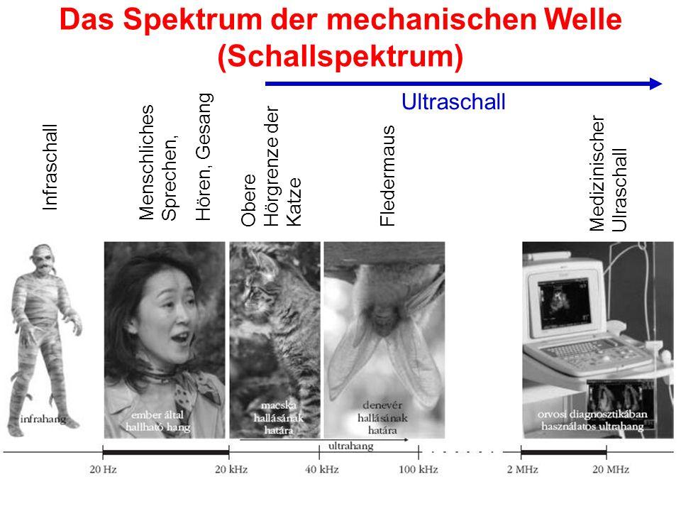 Das Spektrum der mechanischen Welle (Schallspektrum)