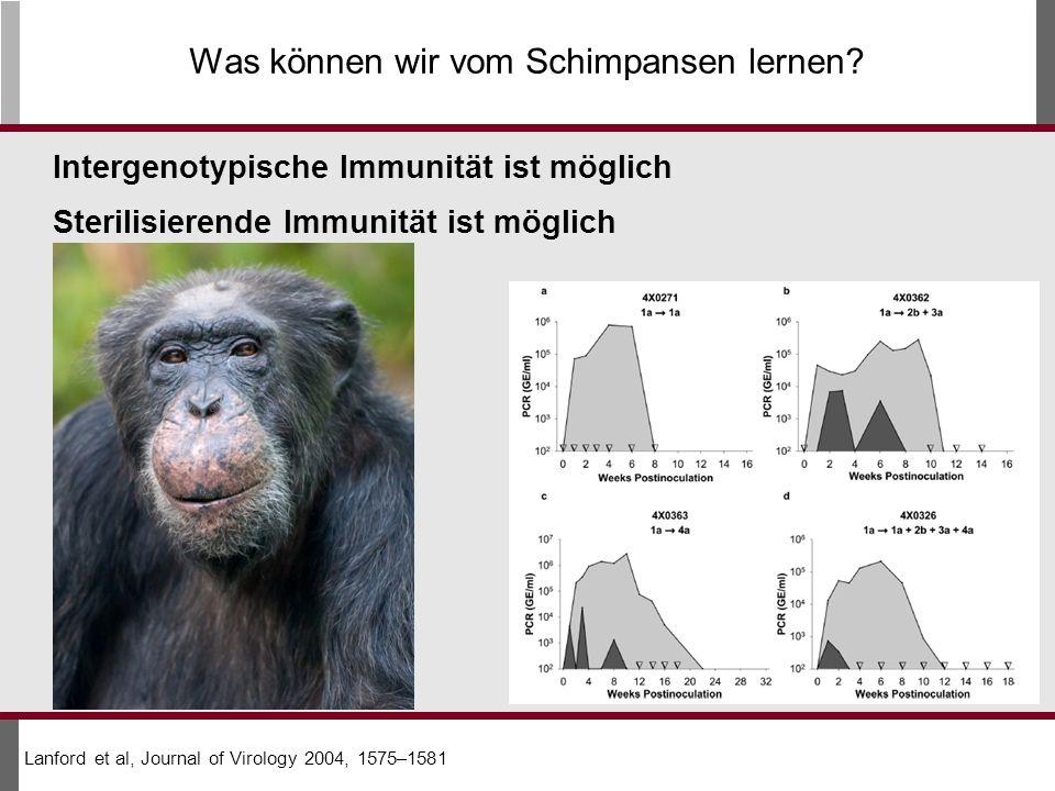 Was können wir vom Schimpansen lernen