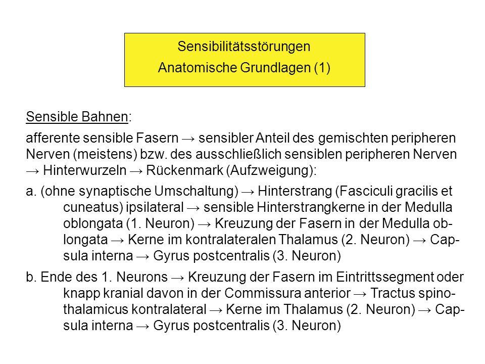 Sensibilitätsstörungen Anatomische Grundlagen (1)