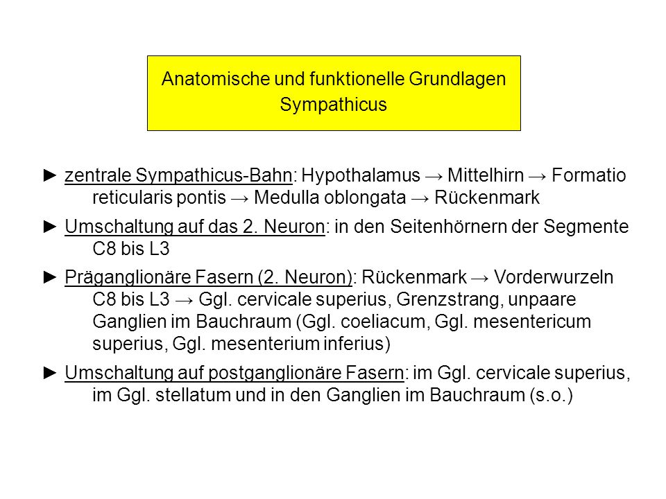 Anatomische und funktionelle Grundlagen