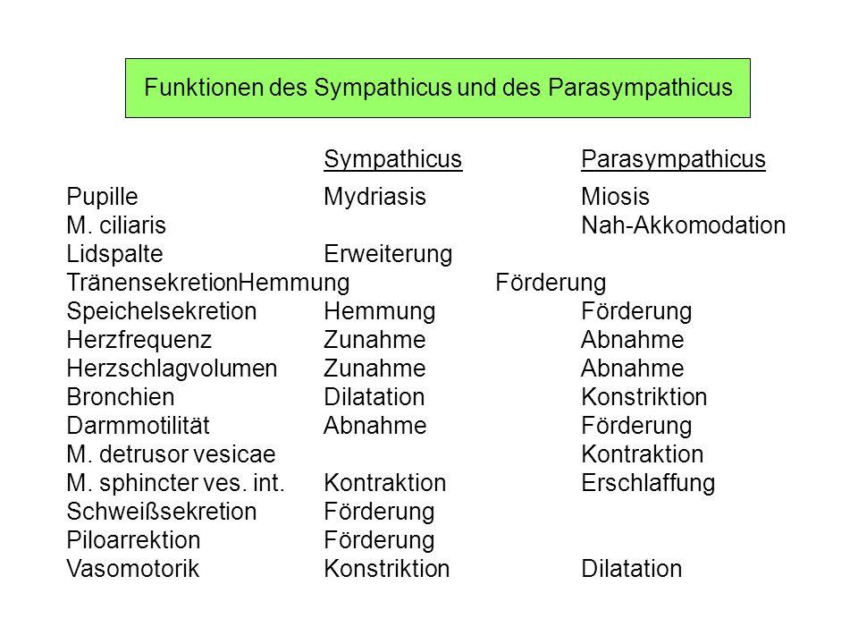Funktionen des Sympathicus und des Parasympathicus