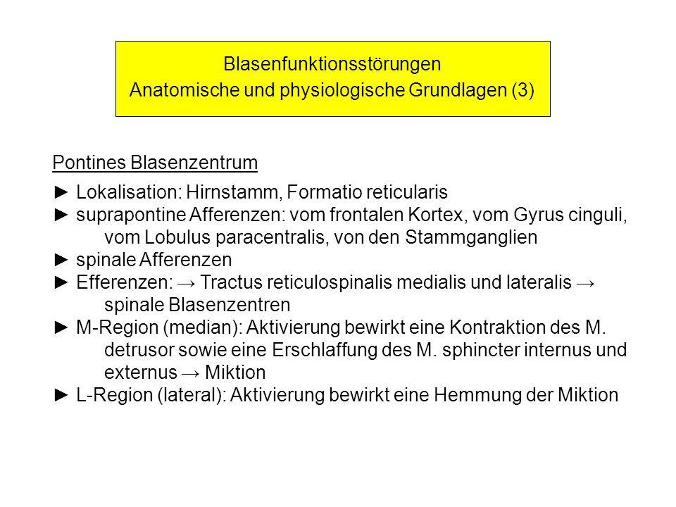 Blasenfunktionsstörungen Anatomische und physiologische Grundlagen (3)