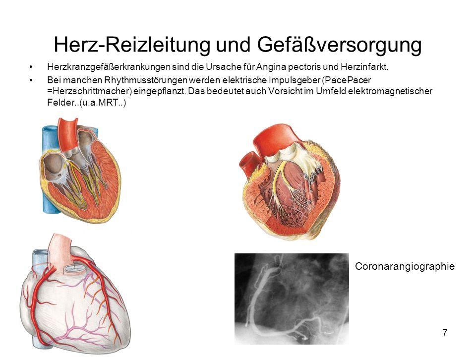 Herz-Reizleitung und Gefäßversorgung
