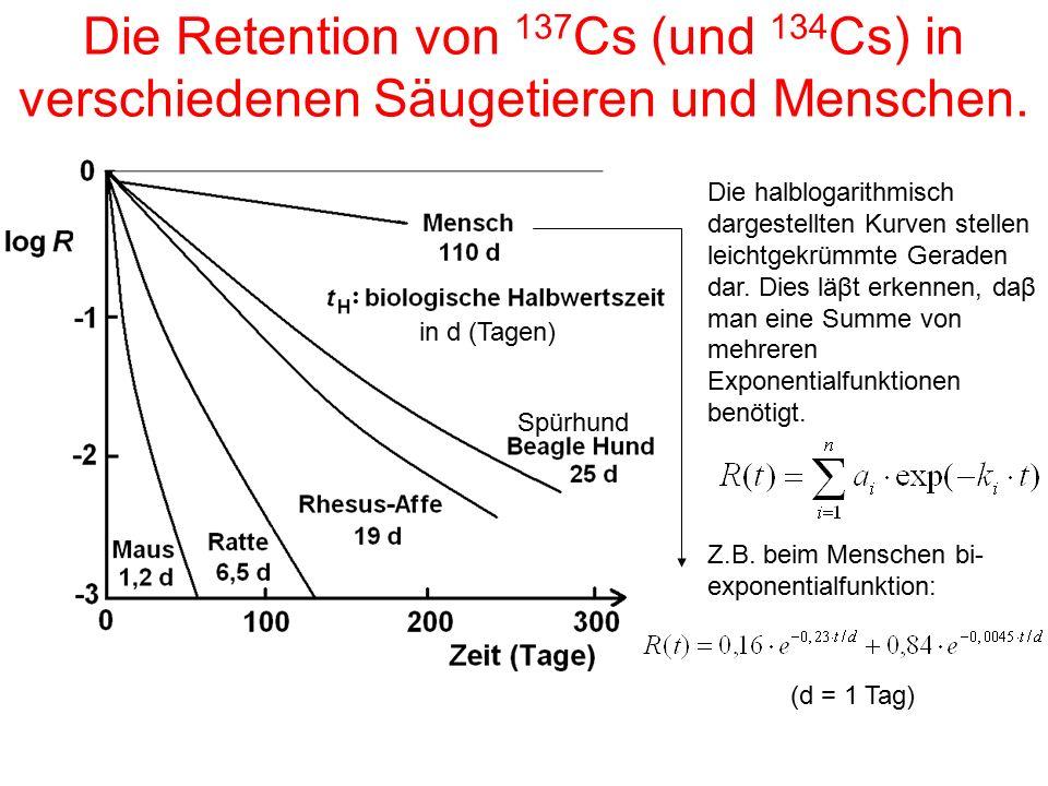 Die Retention von 137Cs (und 134Cs) in verschiedenen Säugetieren und Menschen.