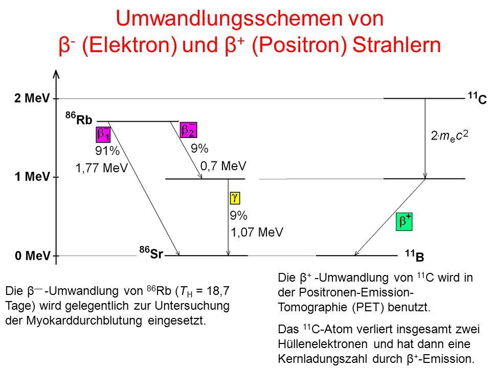 Umwandlungsschemen von β- (Elektron) und β+ (Positron) Strahlern