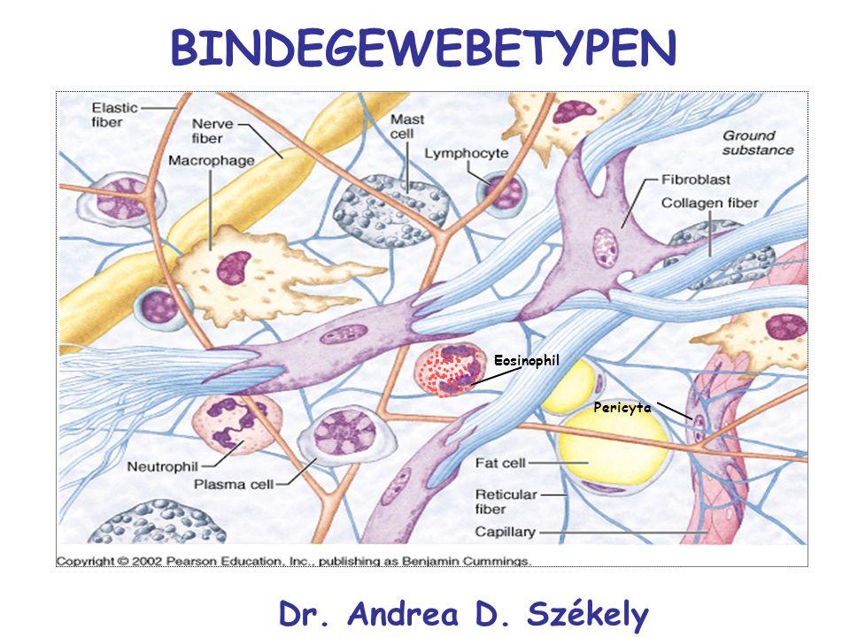 BINDEGEWEBETYPEN Eosinophil Pericyta Dr. Andrea D. Székely