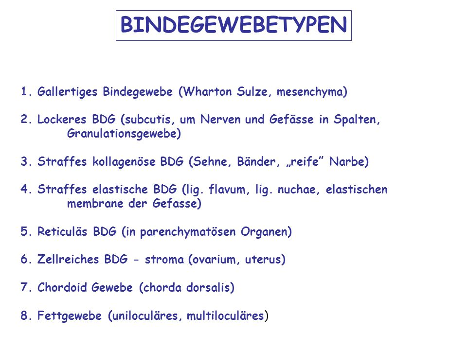 BINDEGEWEBETYPEN 1. Gallertiges Bindegewebe (Wharton Sulze, mesenchyma)