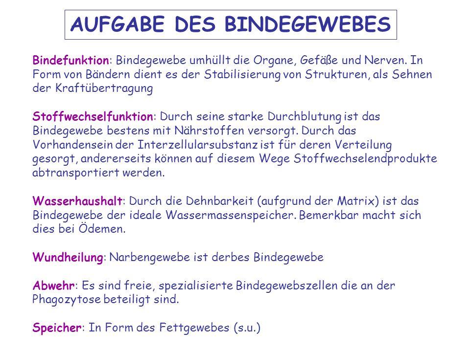 AUFGABE DES BINDEGEWEBES