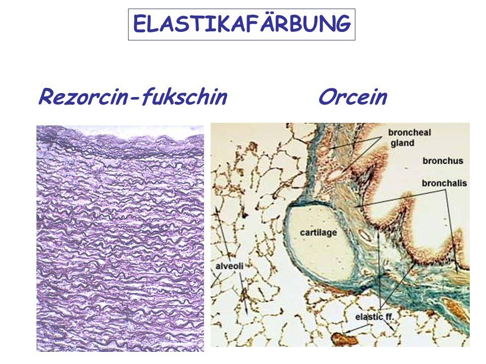 ELASTIKAFÄRBUNG Rezorcin-fukschin Orcein