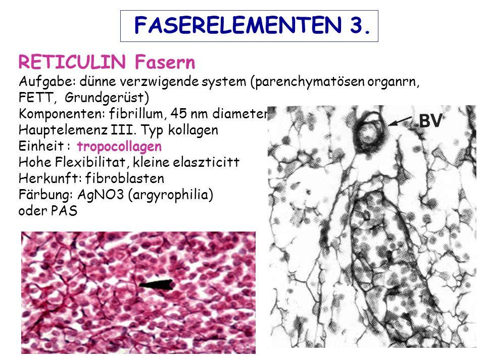 FASERELEMENTEN 3. RETICULIN Fasern