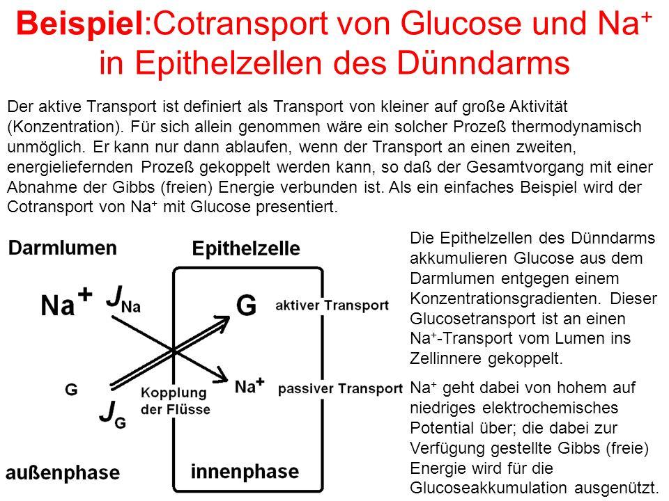 Beispiel:Cotransport von Glucose und Na+ in Epithelzellen des Dünndarms