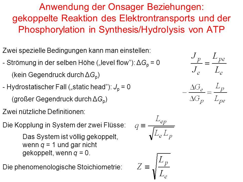 Anwendung der Onsager Beziehungen: gekoppelte Reaktion des Elektrontransports und der Phosphorylation in Synthesis/Hydrolysis von ATP