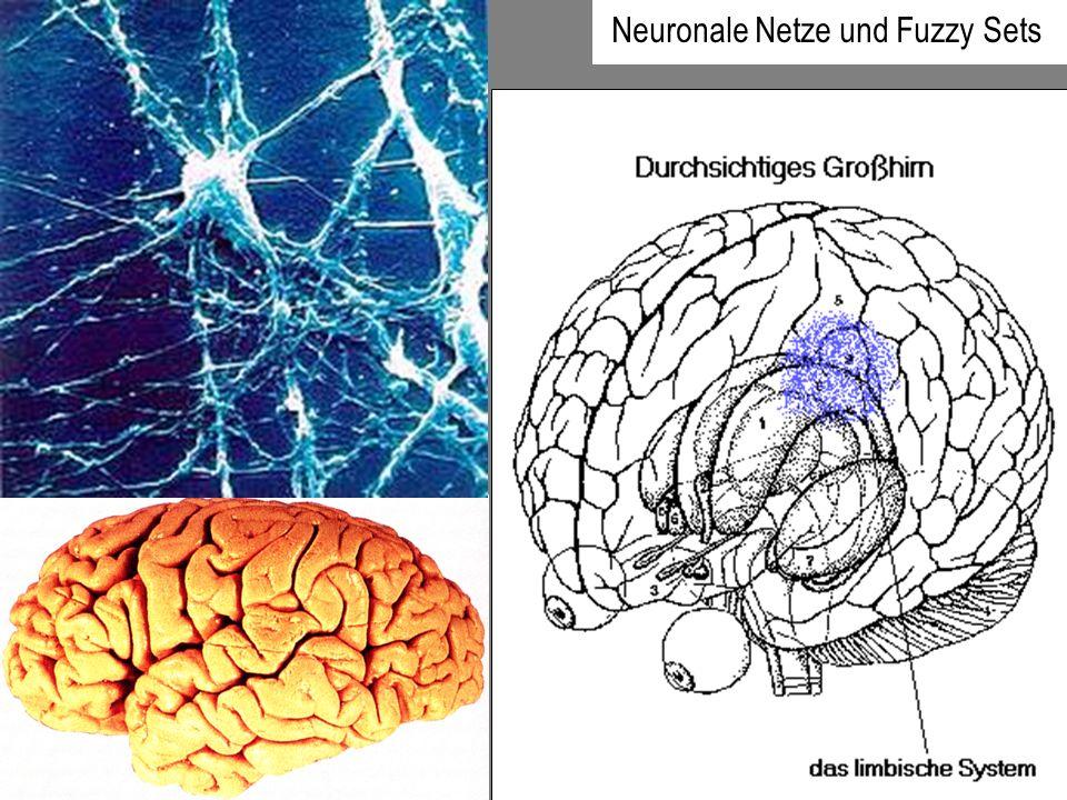 Neuronale Netze und Fuzzy Sets