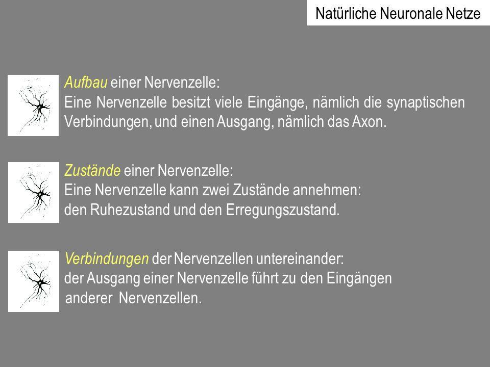 Natürliche Neuronale Netze