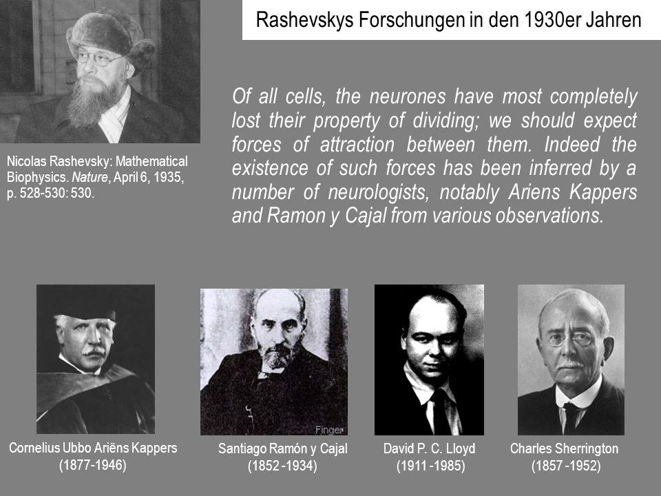 Rashevskys Forschungen in den 1930er Jahren