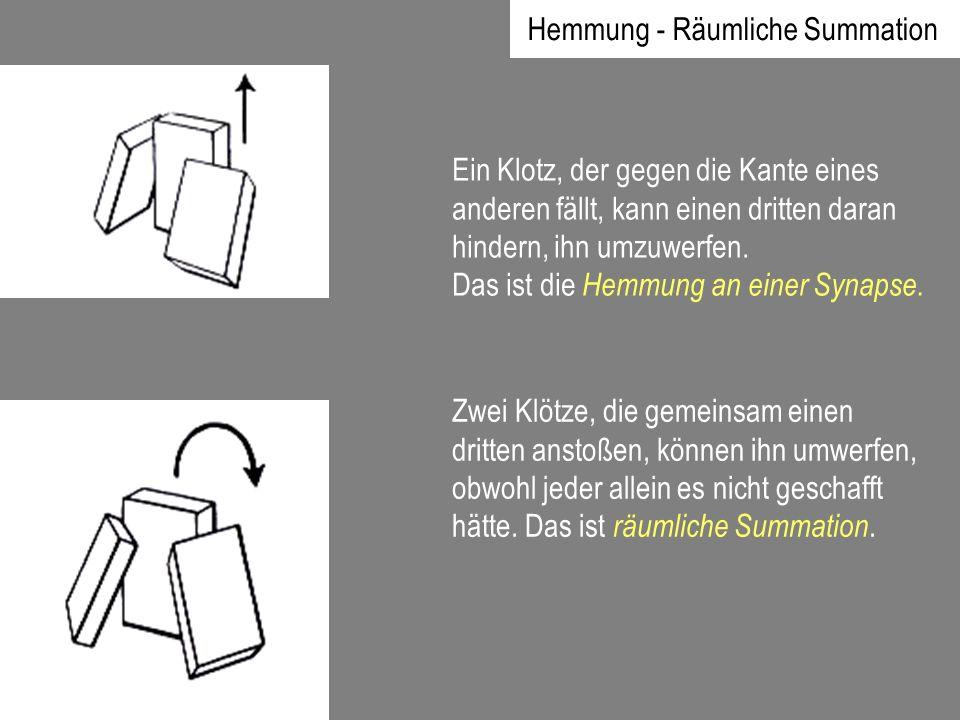 Hemmung - Räumliche Summation