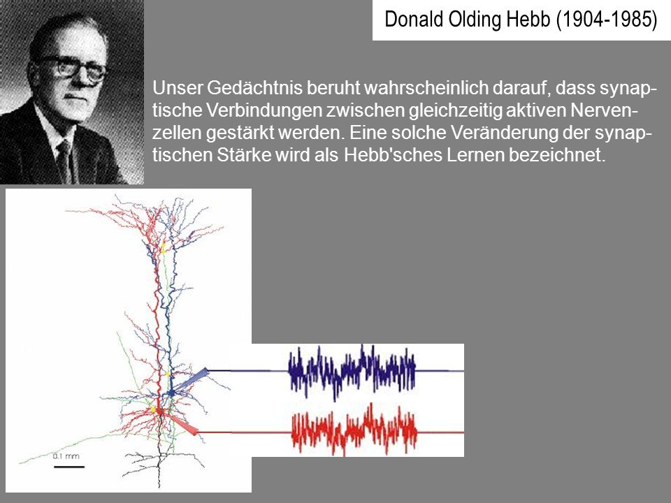 Donald Olding Hebb (1904-1985)