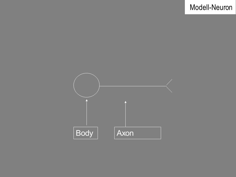 Modell-Neuron Body Axon