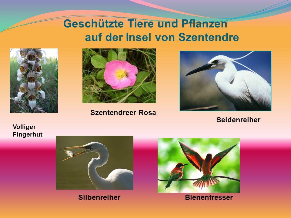 Geschützte Tiere und Pflanzen auf der Insel von Szentendre