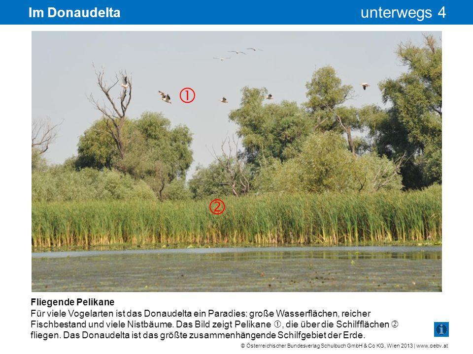   Im Donaudelta Fliegende Pelikane
