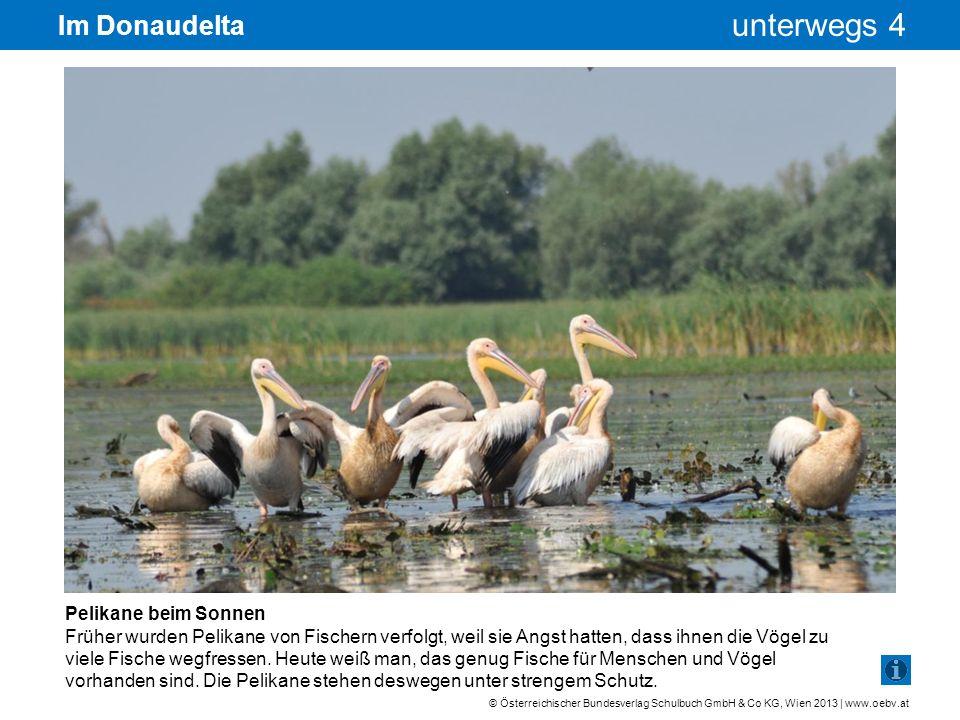Im Donaudelta Pelikane beim Sonnen