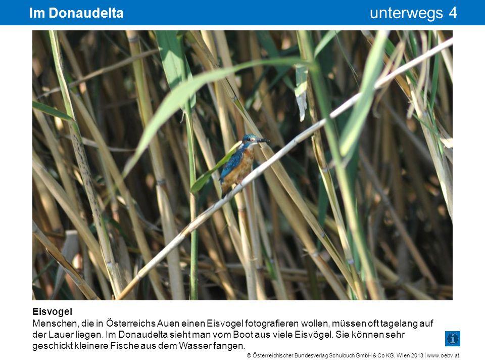 Im Donaudelta Eisvogel