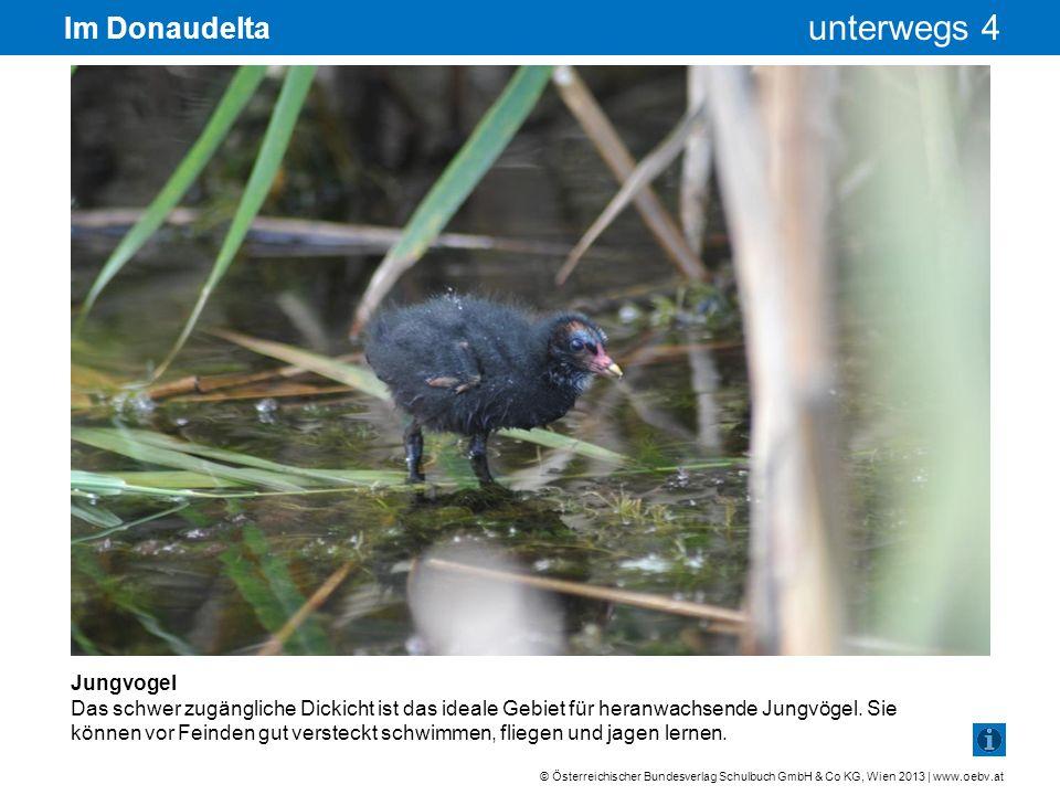Im Donaudelta Jungvogel