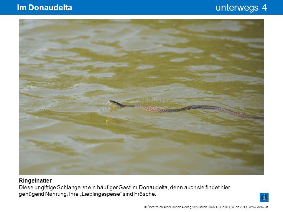 Im Donaudelta Ringelnatter