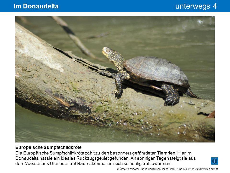 Im Donaudelta Europäische Sumpfschildkröte