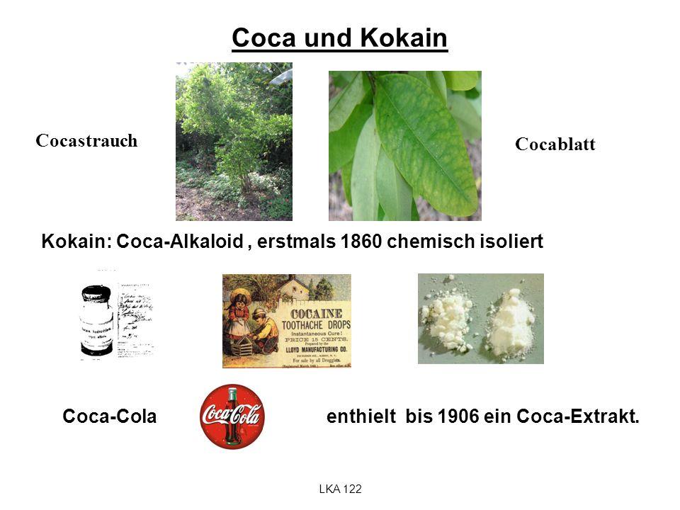 Coca und Kokain Cocastrauch Cocablatt
