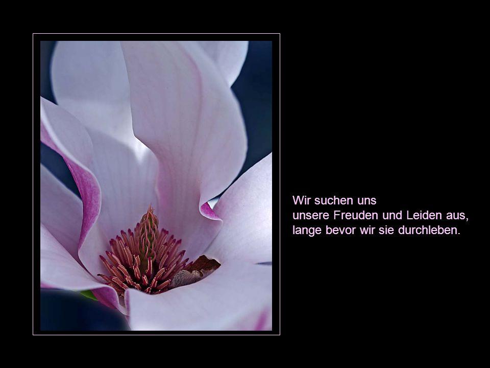 Wir suchen uns unsere Freuden und Leiden aus, lange bevor wir sie durchleben.