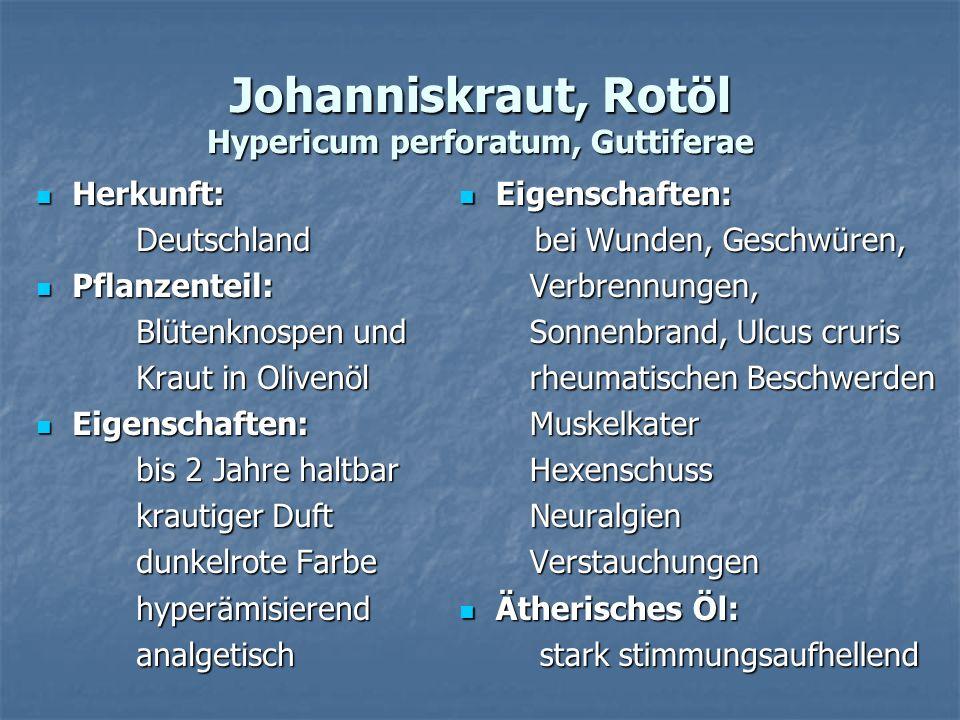 Johanniskraut, Rotöl Hypericum perforatum, Guttiferae