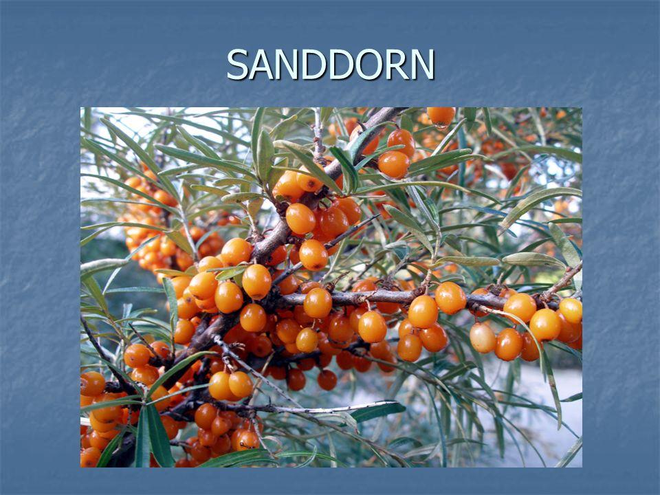 SANDDORN