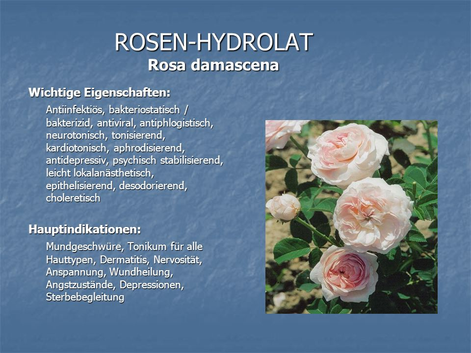 ROSEN-HYDROLAT Rosa damascena