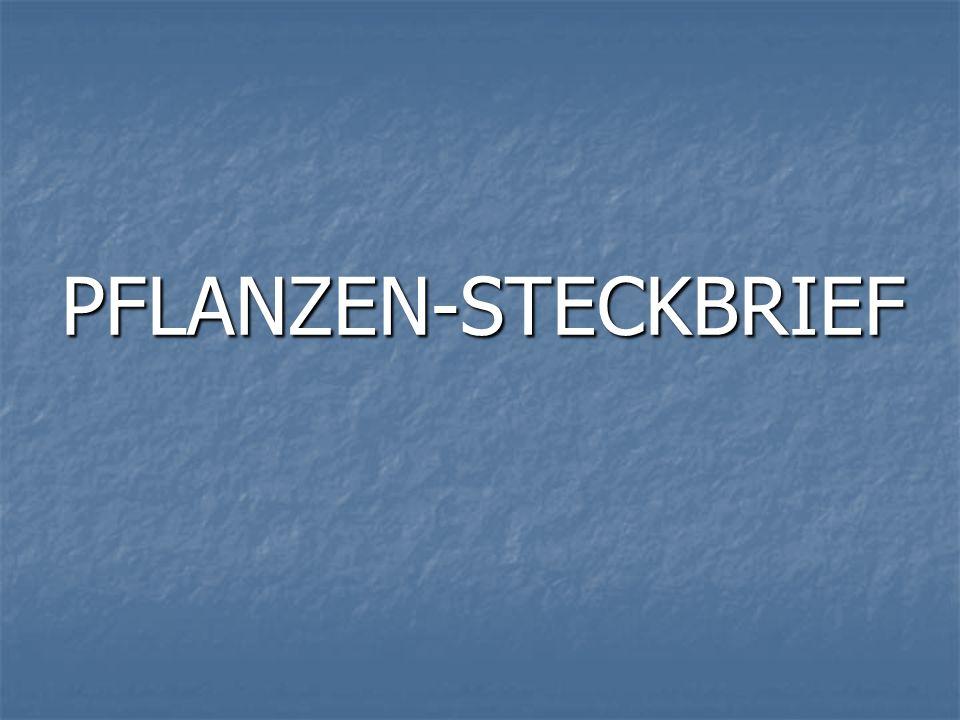 PFLANZEN-STECKBRIEF