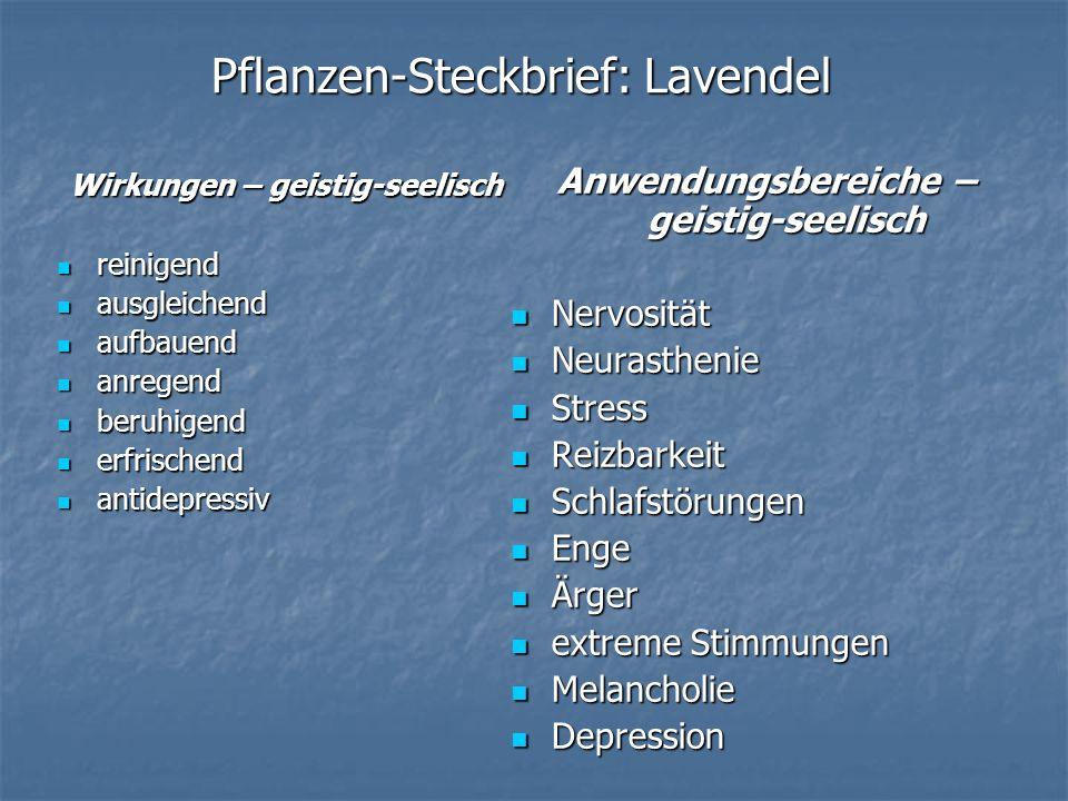 Pflanzen-Steckbrief: Lavendel