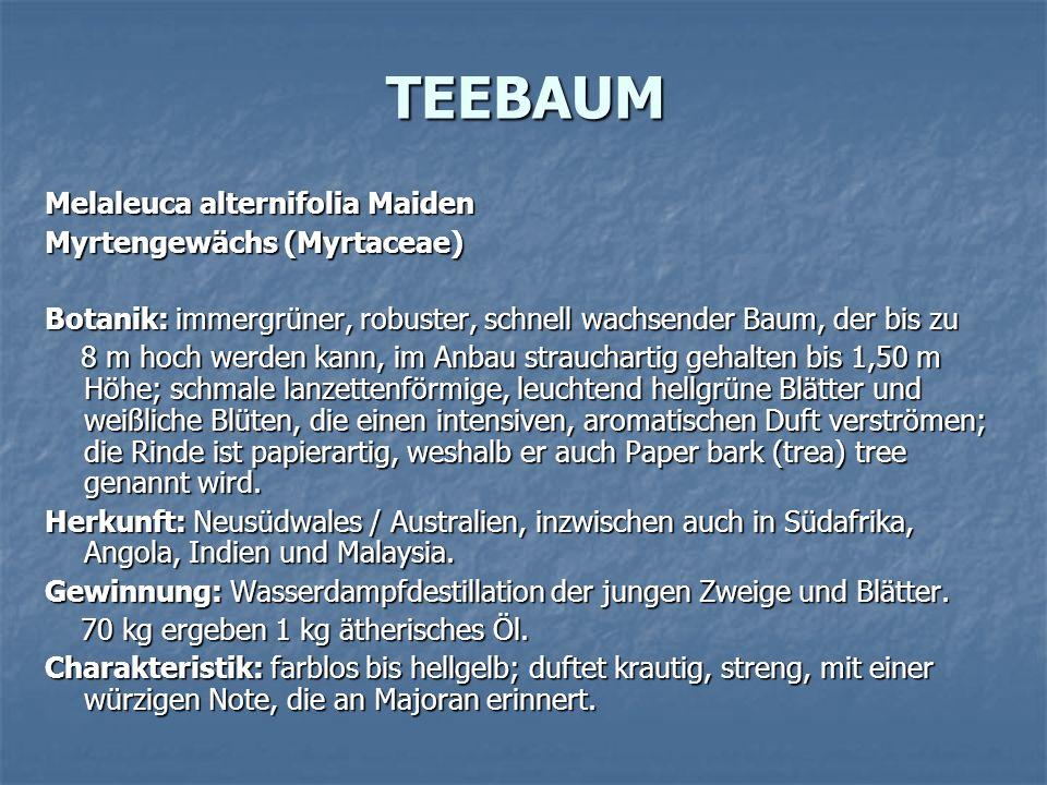 TEEBAUM Melaleuca alternifolia Maiden Myrtengewächs (Myrtaceae)