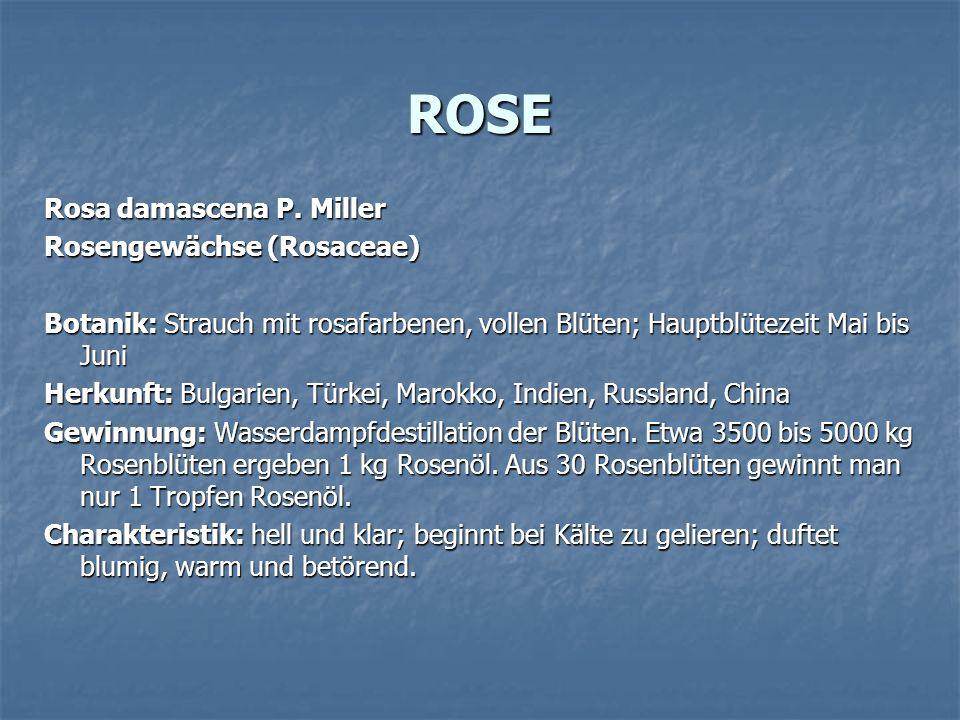 ROSE Rosa damascena P. Miller Rosengewächse (Rosaceae)