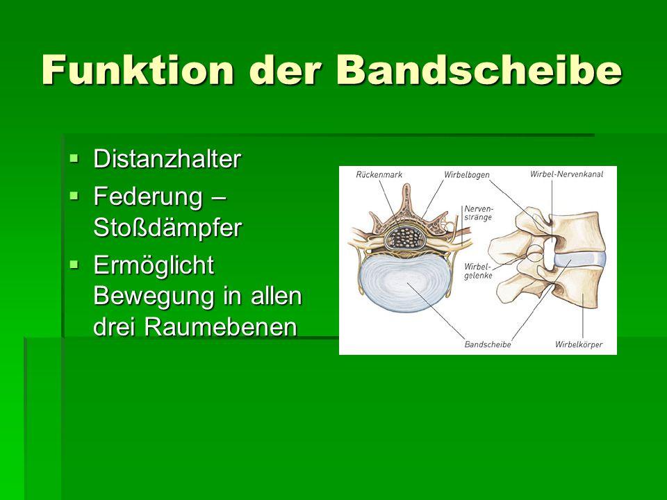 Funktion der Bandscheibe