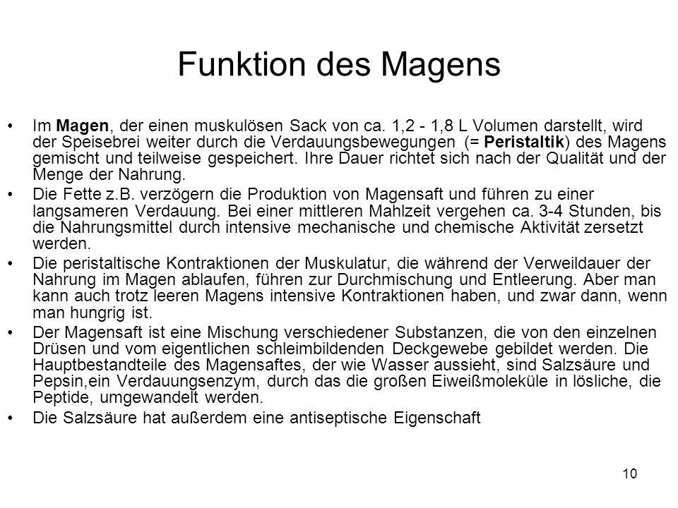 Atemberaubend Funktion Des Magen Ideen - Menschliche Anatomie Bilder ...