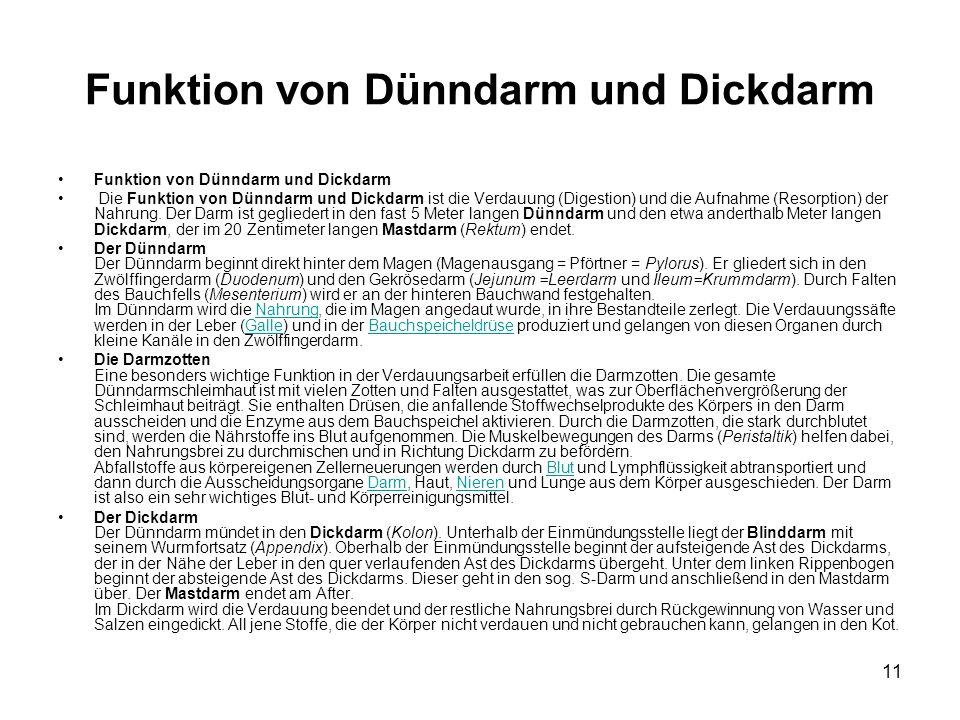 Funktion von Dünndarm und Dickdarm