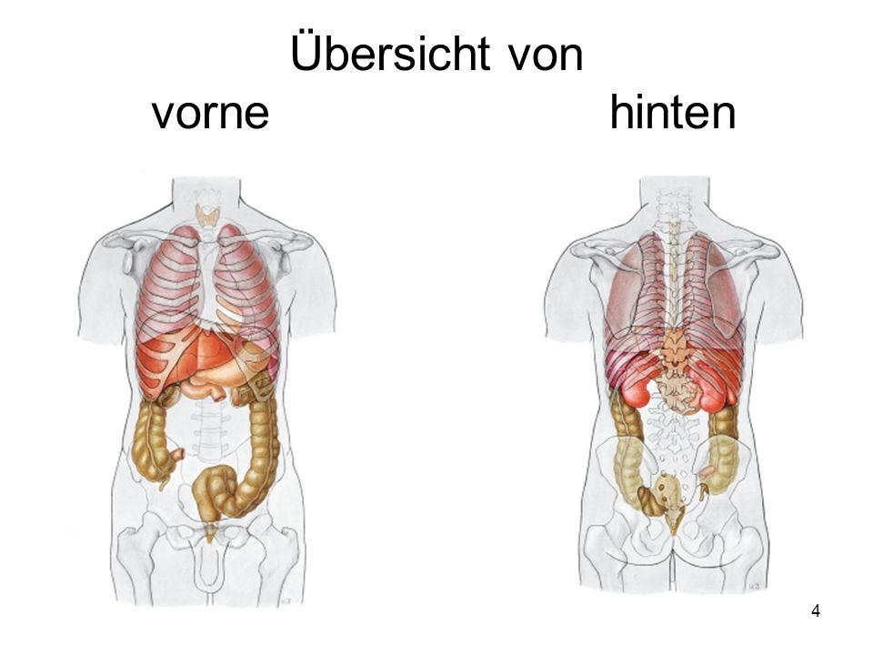 Tolle Körperorgan Anatomie Galerie - Anatomie Ideen - finotti.info