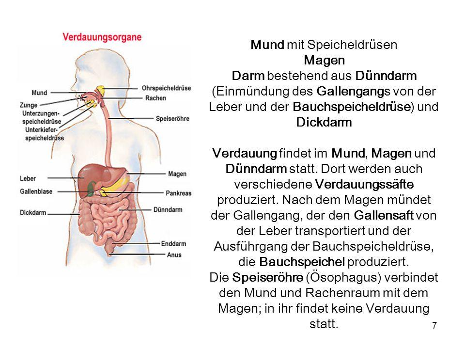 Schön Funktion Des Verdauungssystems Ideen - Anatomie Ideen ...