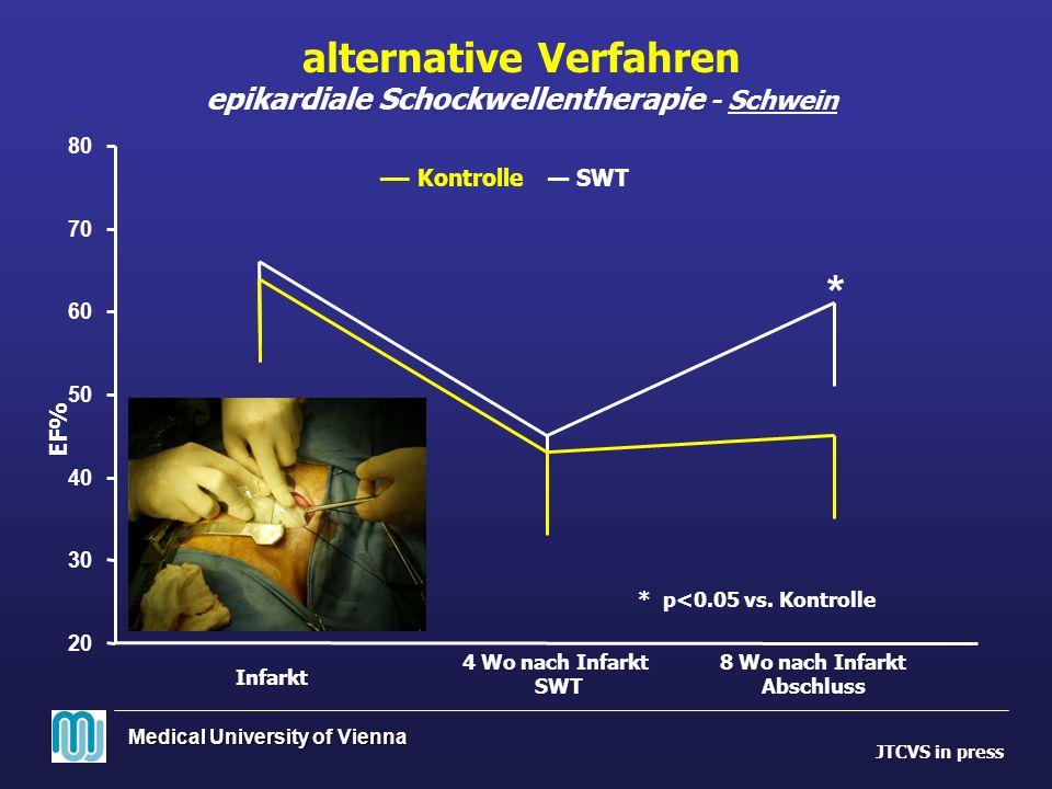 alternative Verfahren epikardiale Schockwellentherapie - Schwein